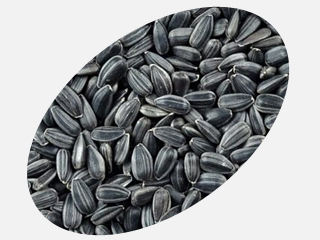 Black sunflower seeds Gourmet